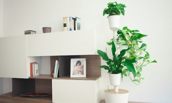 Sorteo de jardín vertical de interior Citysens