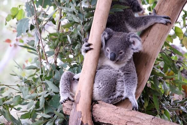 Luna de miel en Nueva Zelanda y Australia