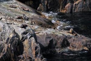 Viaje a Nueva Zelanda - Milford Sound focas
