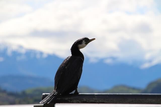 Viaje a Nueva Zelanda: Wanaka