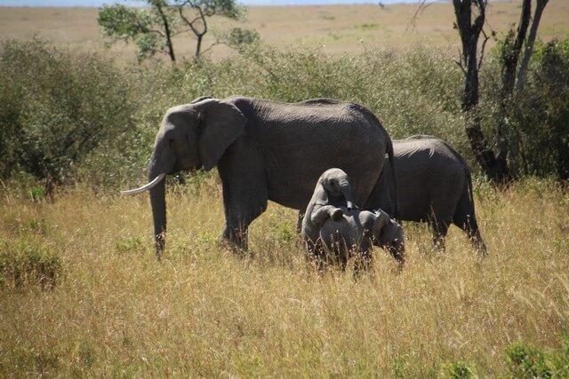 Safari en Kenia elefantes