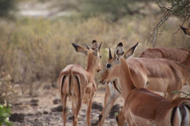 Safari en África precios y consejos