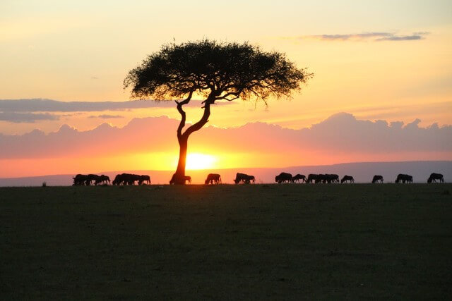 Safari Kenia, puesta de sol Masai Mara