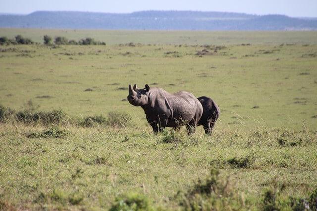 Safari en Kenia rinoceronte