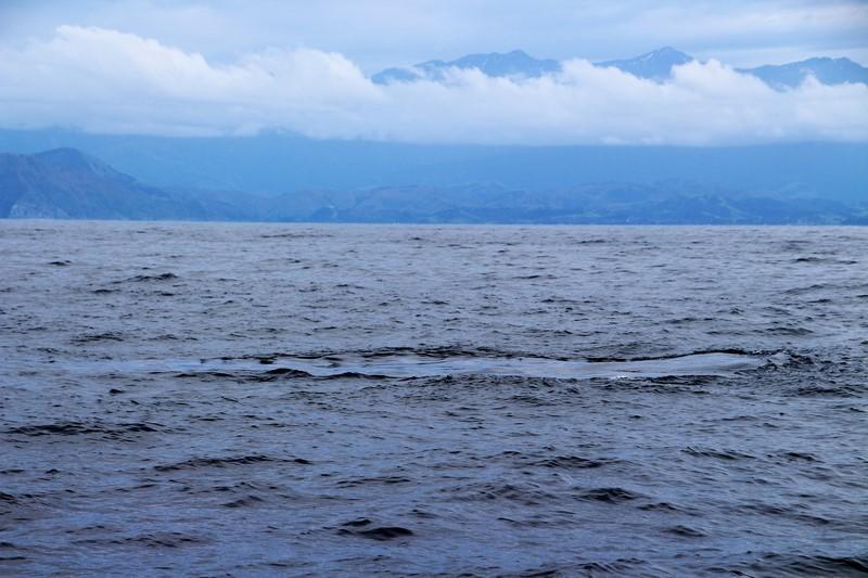 Nueva Zelanda Ballenas ballenas mancha aceite