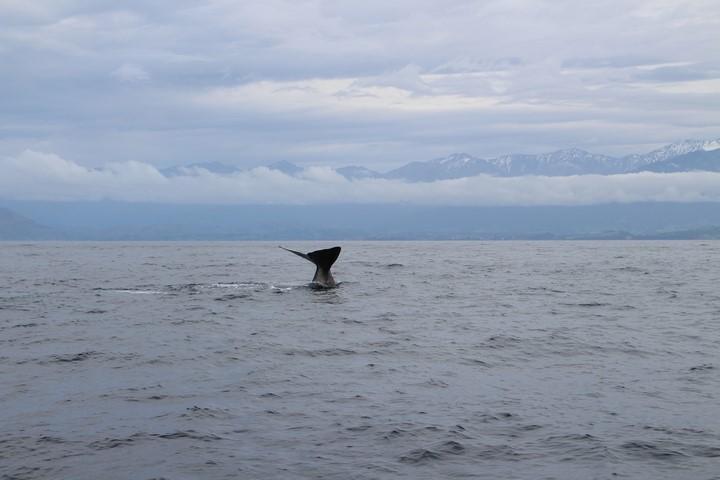 Viaje a Nueva Zelanda: ballenas en Kaikoura