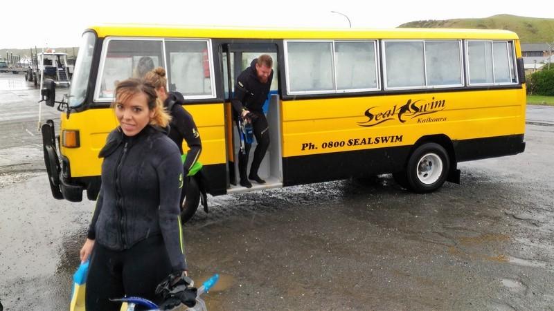 Nadando con focas en Kaikoura