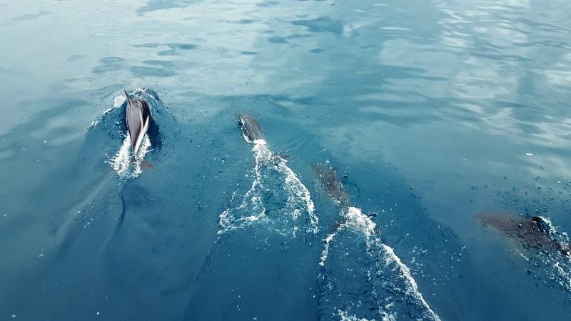 Viaje a Nueva Zelanda: Kaikoura delfines