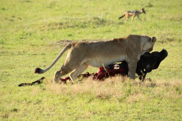 Viaje Kenya - Masai Mara safari