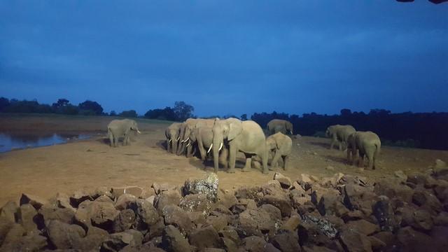 Manada elefantes Aberdare The ARK