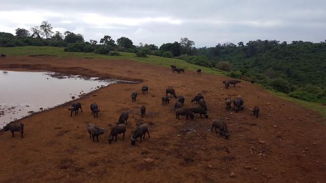 The Ark, vistas SAfari Kenia