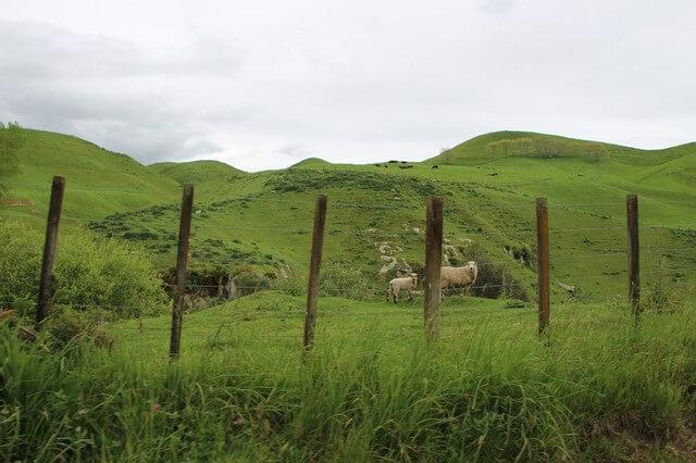 De Taupo a Rotorua Nueva Zelanda