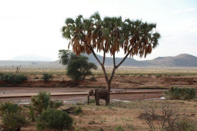 Safari Kenya: Samburu elefante