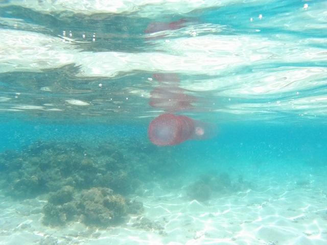 Medusa Hurghada