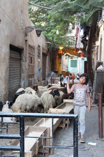 Que ver en el Cairo, casco antiguo Egipto