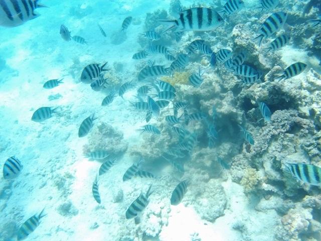 Peces Snorkel Egipto