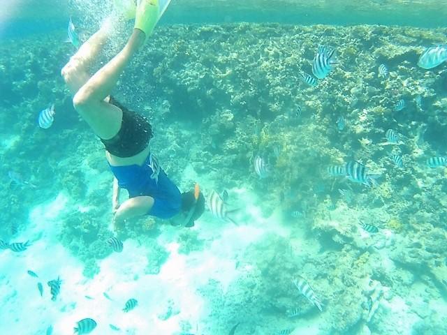 Snorkel entre un banco de peces