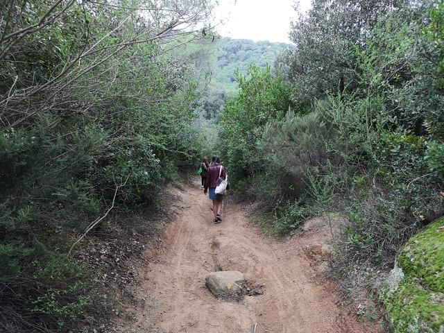 Camino bosque encantado Orrius