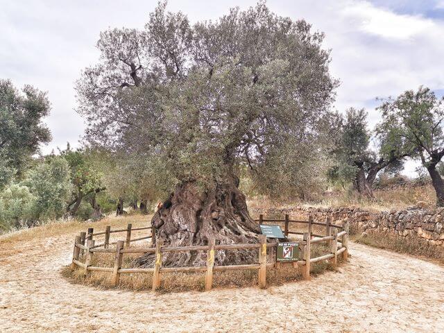 Lo parot Horta de Sant Joan Tarragona
