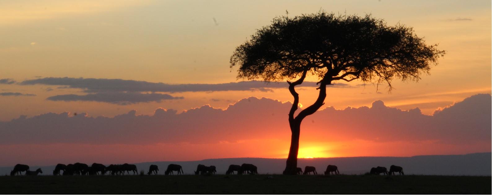 Safari en Kenia guia