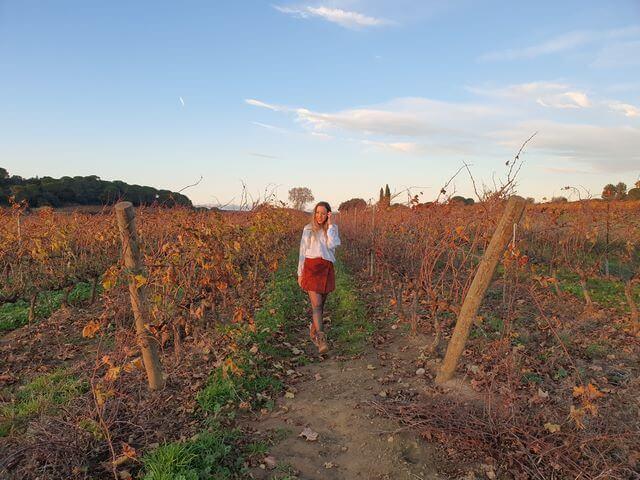 Viñedos camino a Narbonne