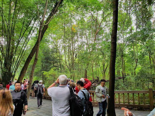 Chengdu Research Base of Giant Panda Breeding Center