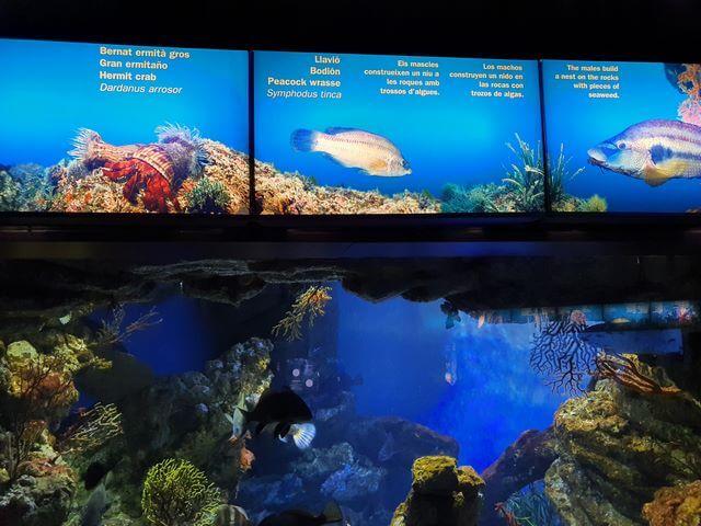 Todos los acuarios tienen un descriptivo de los peces que hay dentro