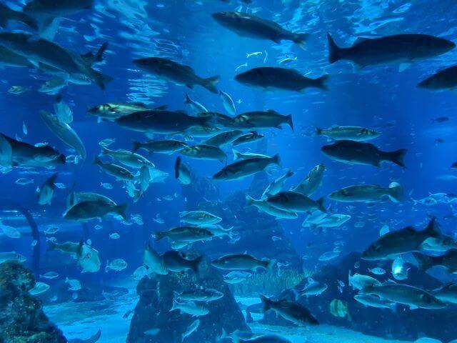 Cientos de peces en el Oceanario