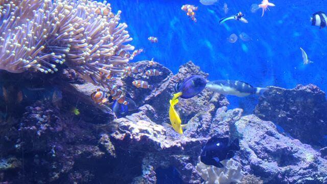 Pez Payaso (encontramos a Nemo en el Aquarium)